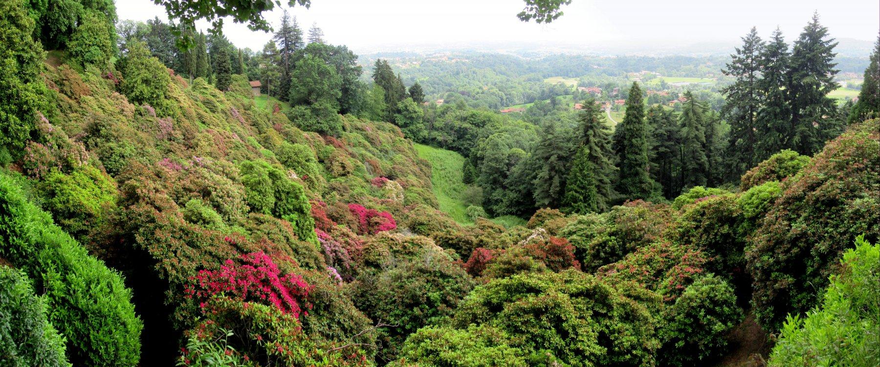 Conca dei Rododendri (ormai sfioriti) nel Parco della Burcina