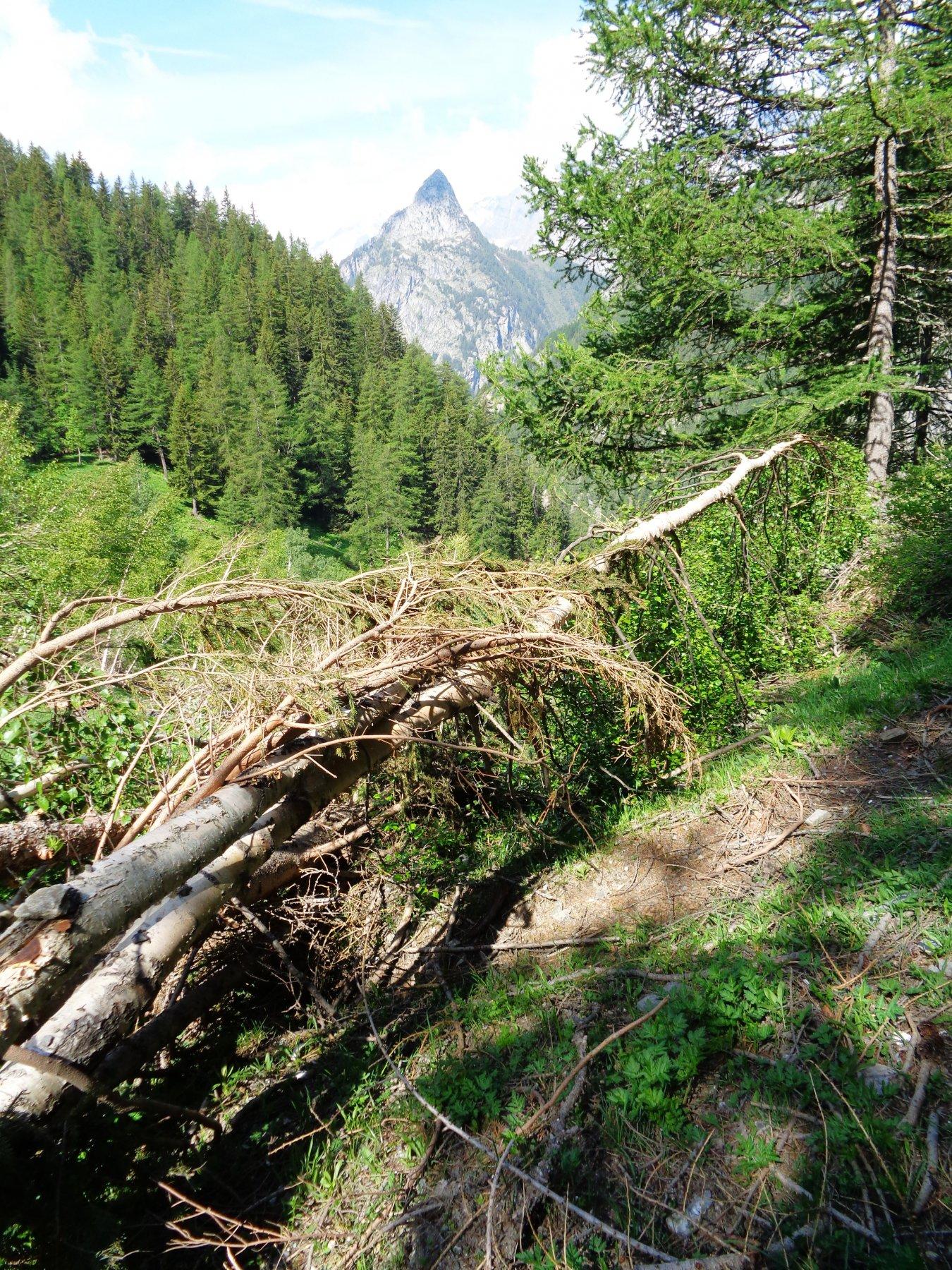 alberi caduti sul sentiero