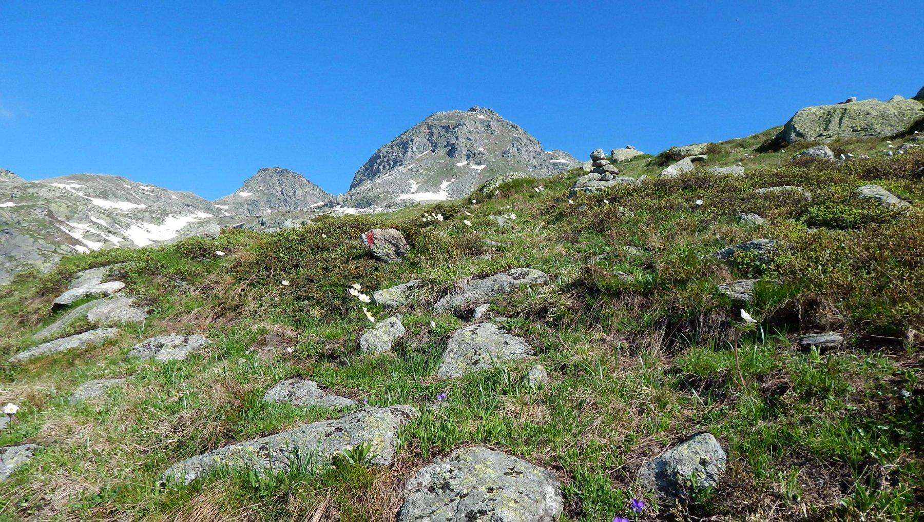 il monte Morion visto dalla dorsale