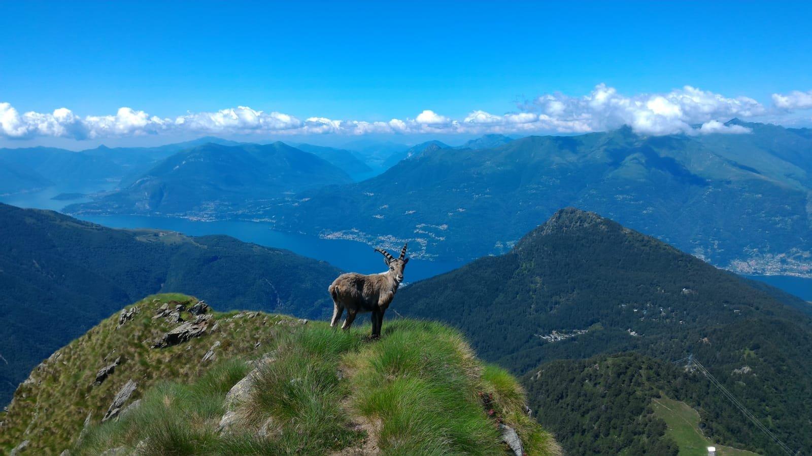 Legnone (Monte) dai Roccoli Lorla 2018-06-23