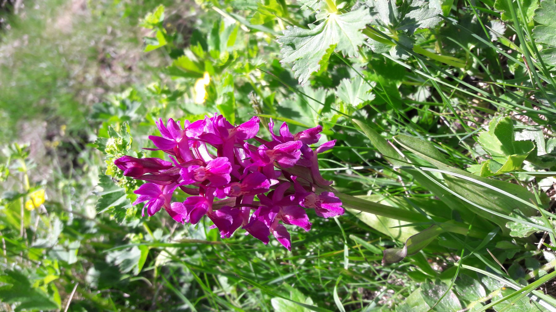 Splendide fioriture