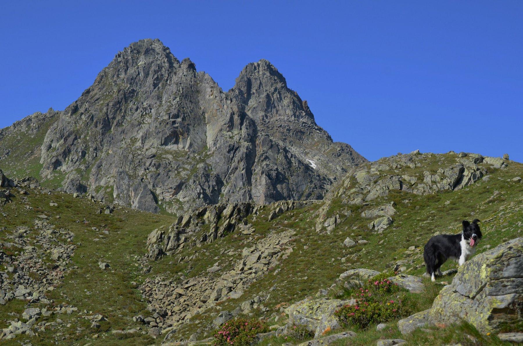 Cima Binasia e Schrumm-Spitze dallo Schrumm Jochl
