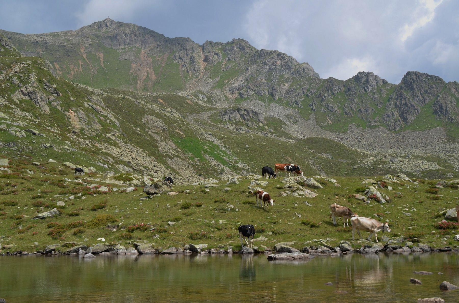 Lago Poinella 2180 m e Stùbele dietro