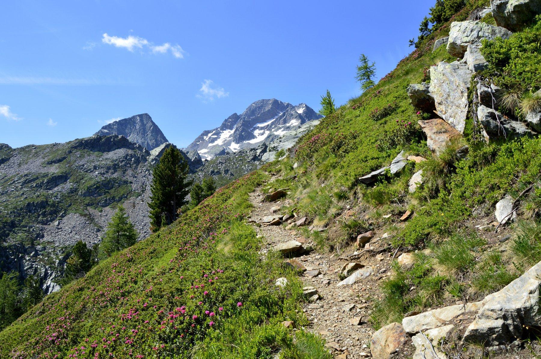 Sullo sfondo fanno capolino Marienhorn (a sx) e mont Nery