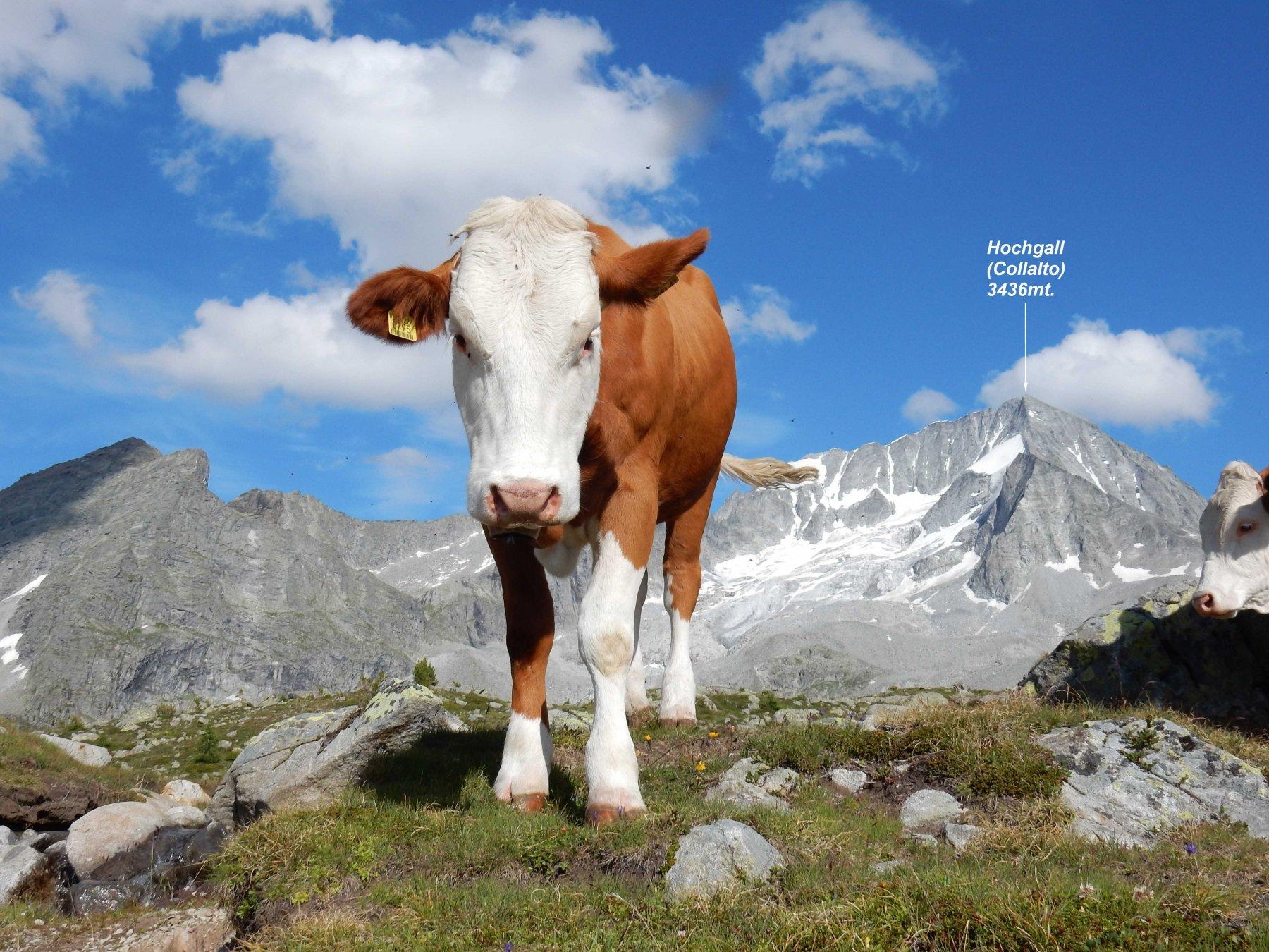 Cartolina dalla Val di Riva.