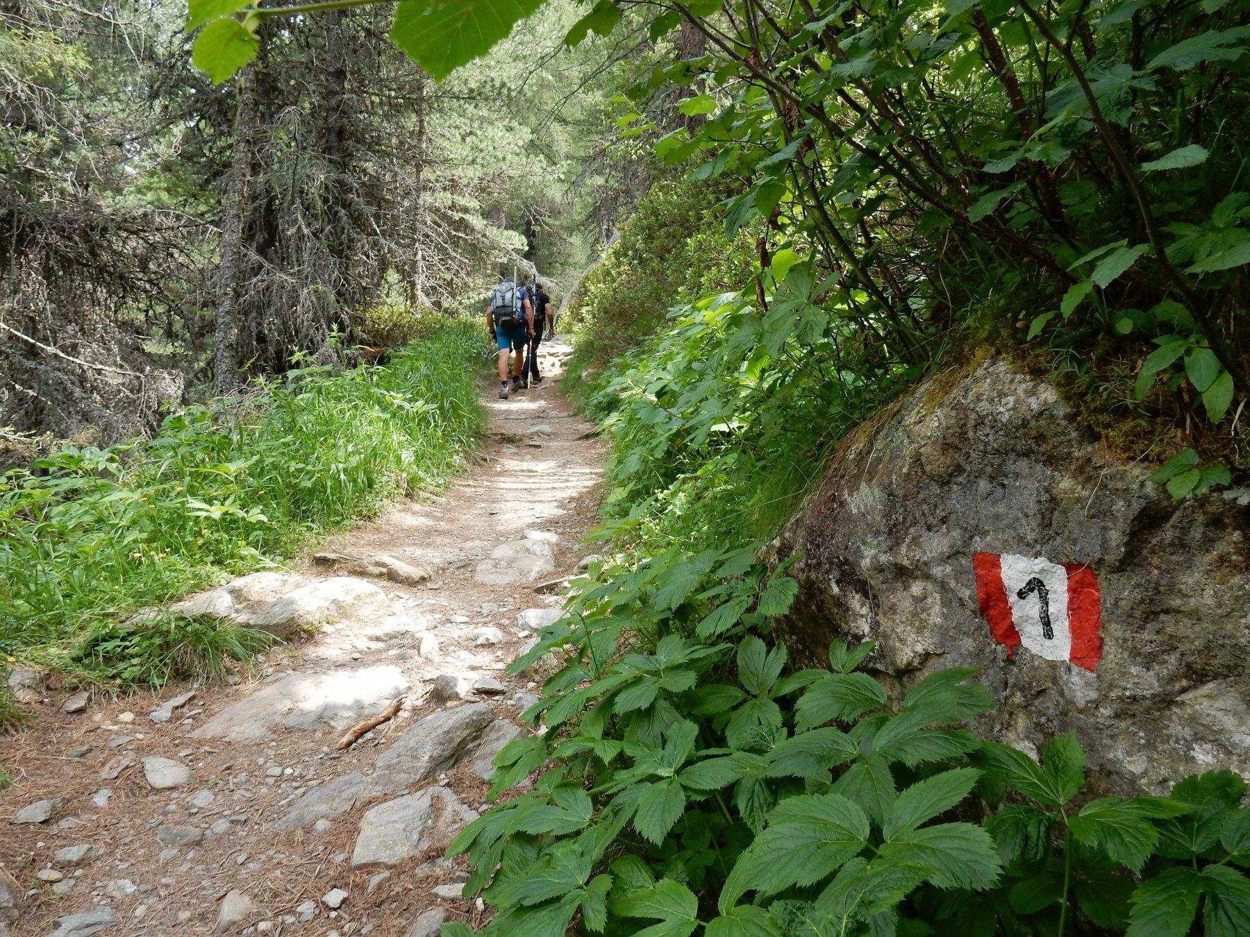 Si segue il sentiero n°1