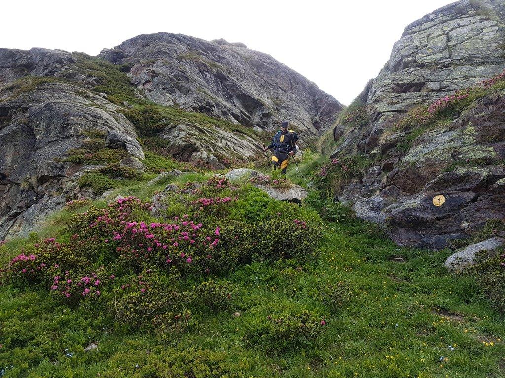 Sentiero 1 in mezzo ai rododendri.