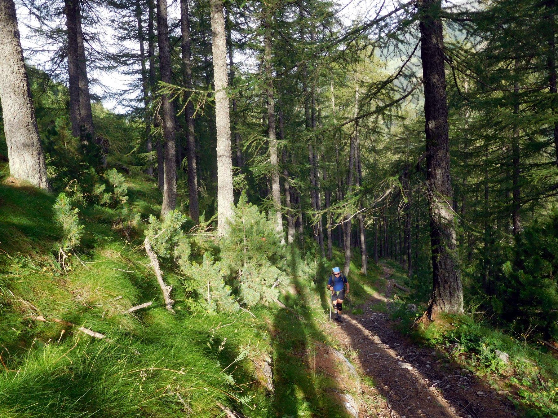 prima parte in un bellissimo bosco