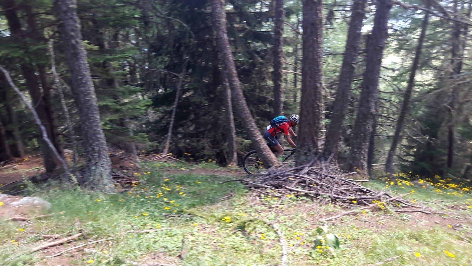 Tornanti nel bosco