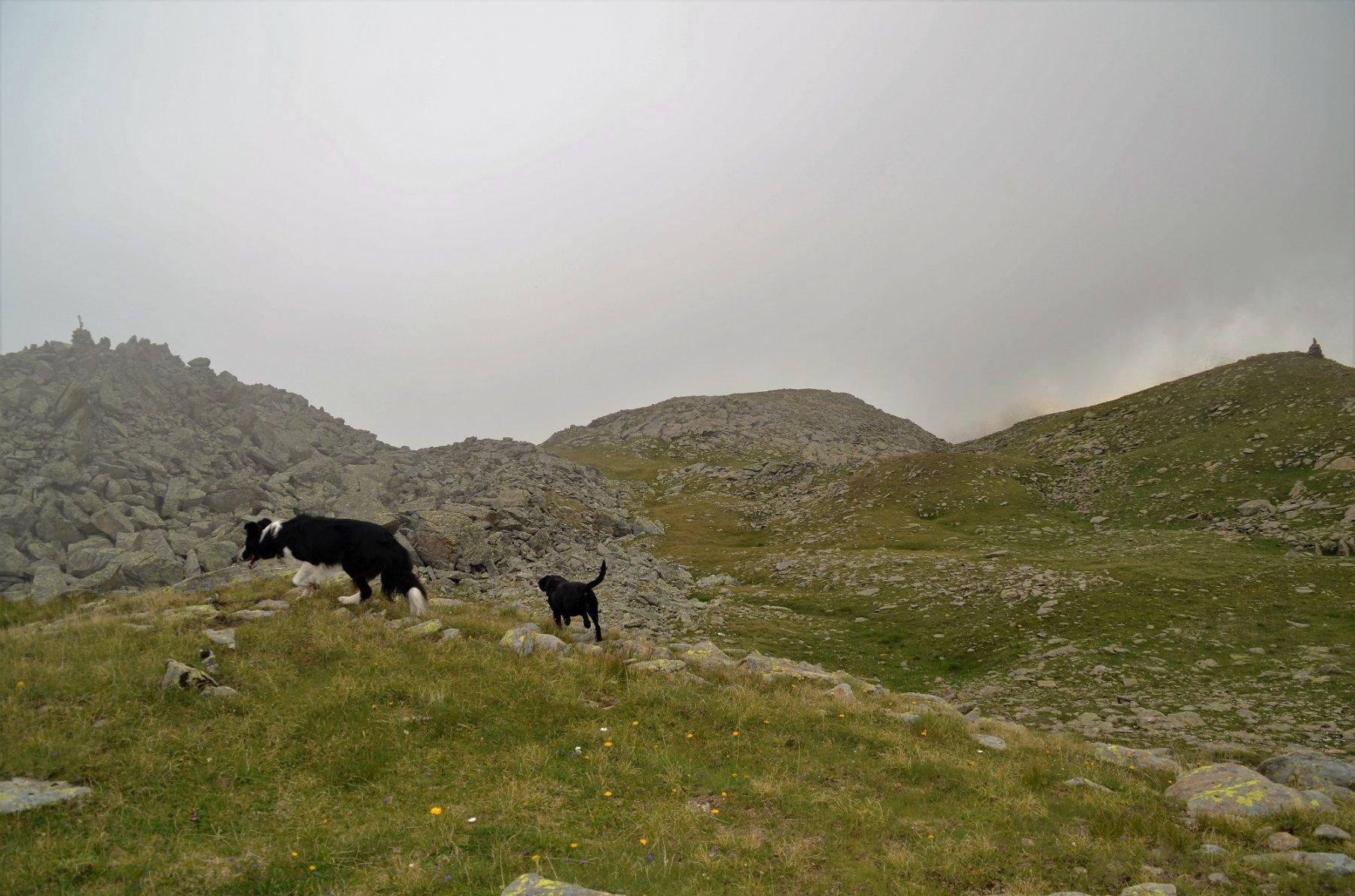 Il catino erboso circondato dalle cinque cime