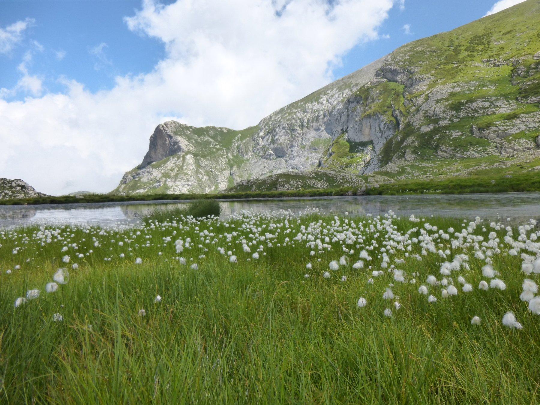 fioritura sulle rive del lago Rataira