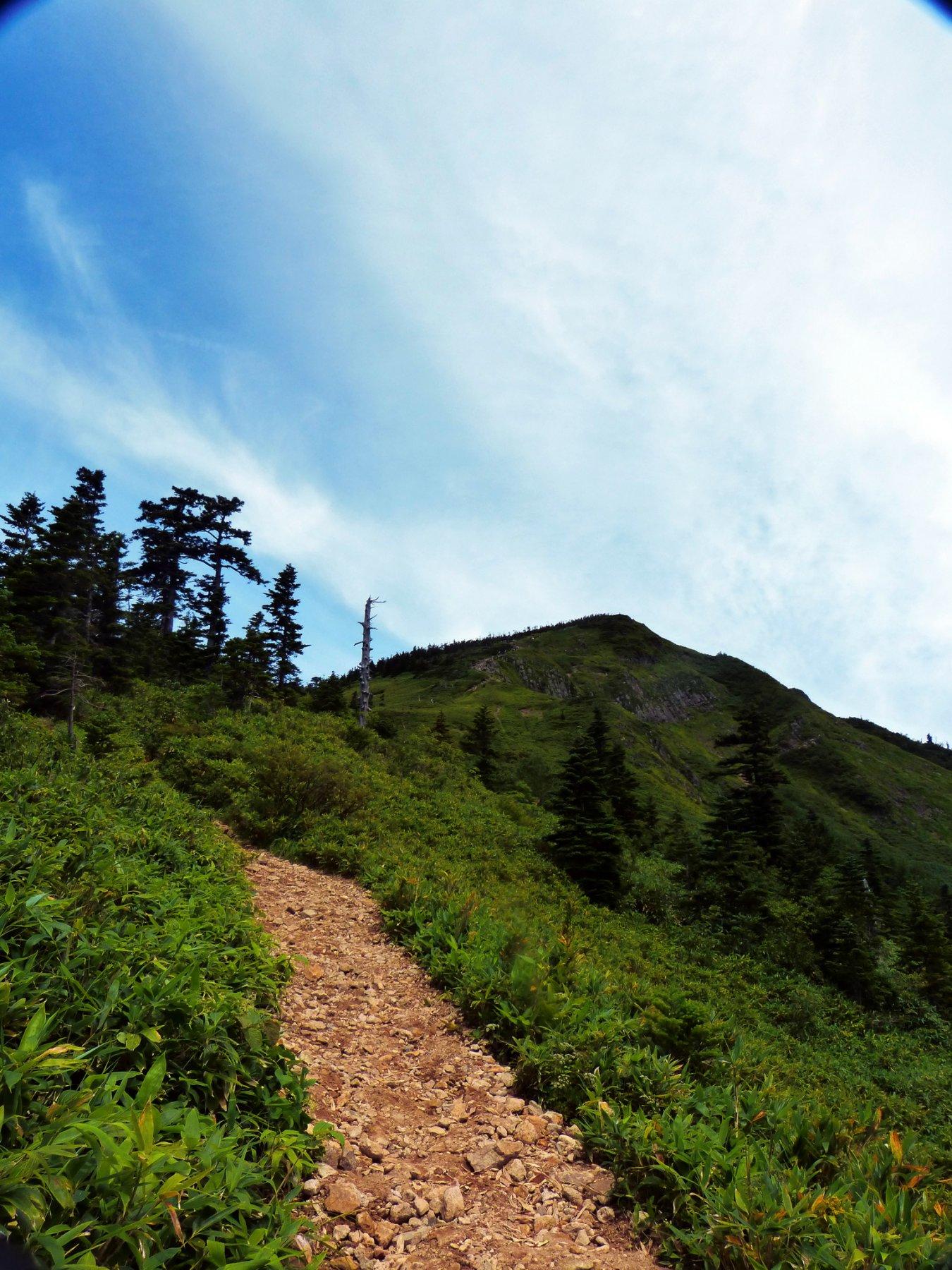 Iwasuge-yama (Monte) da Ichinose, anello per Terako-yama > Higashitate-yama 2018-08-10