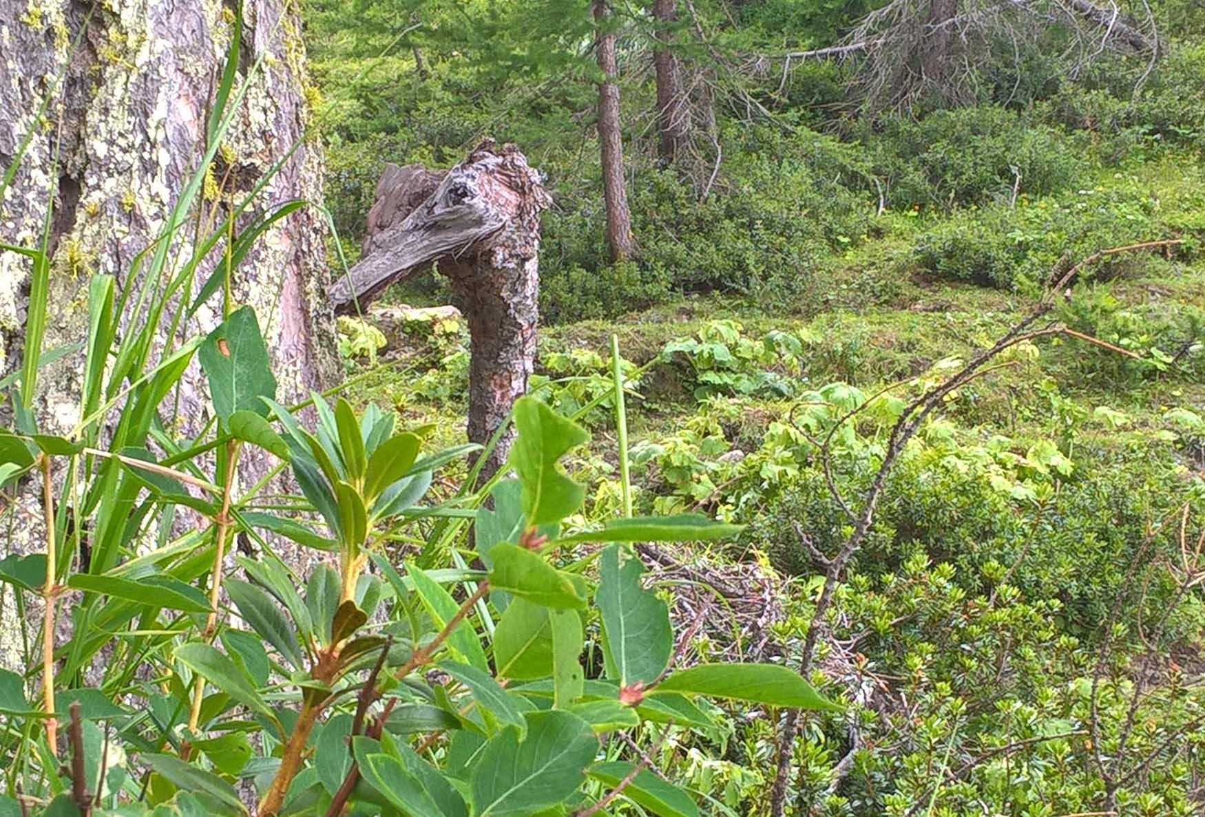 Particolari nel bosco