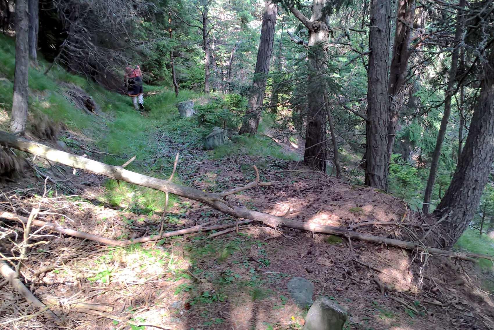 Sentiero al Col S.Pantaleon
