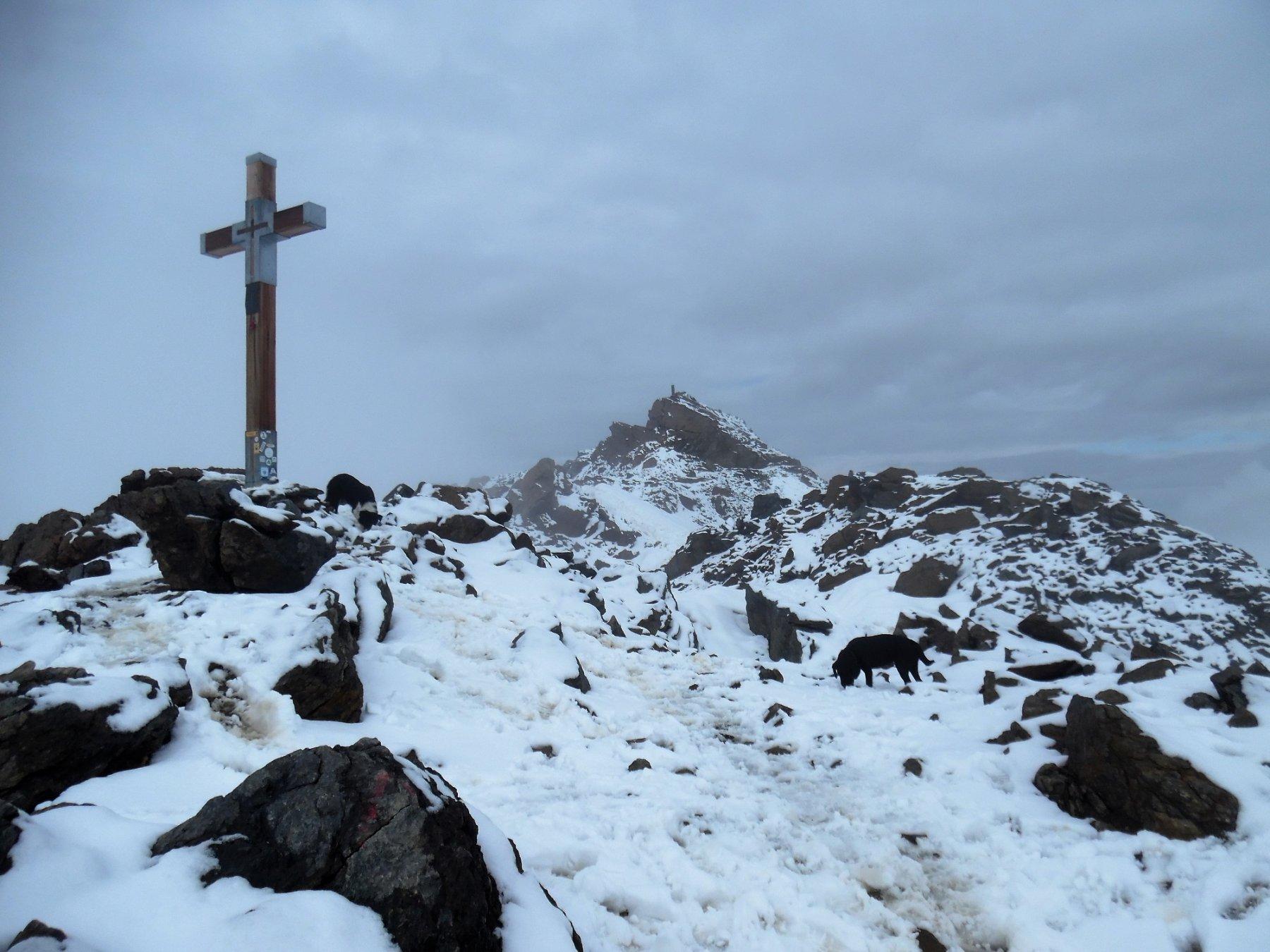 Croce di vetta del Vioz 3645 m