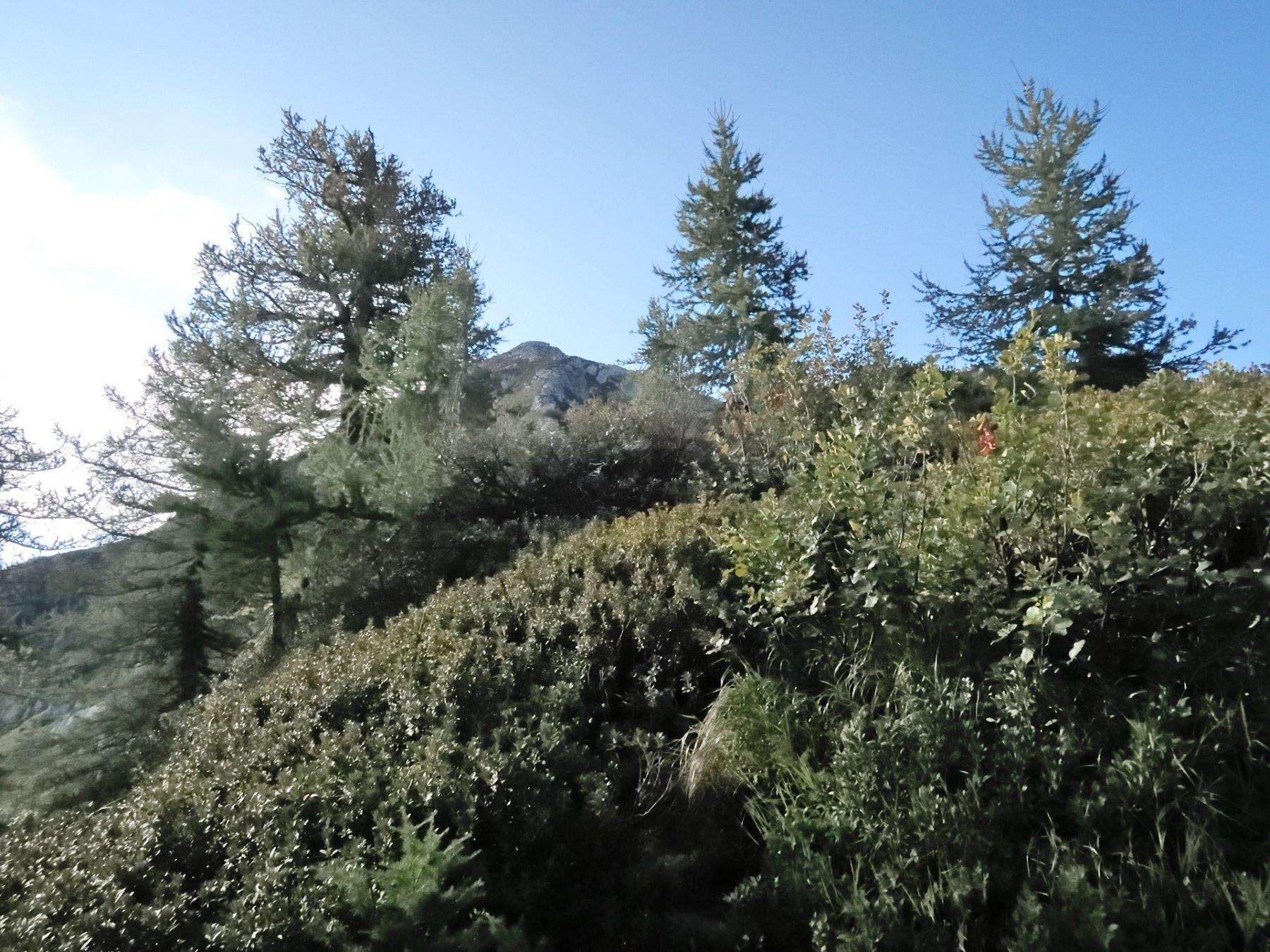 Dalla Bocchetta di Cavalla verso la cresta Nord