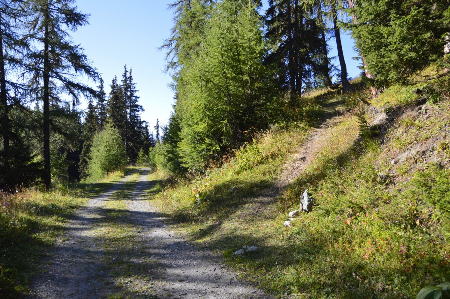 Prendere a destra nel bosco