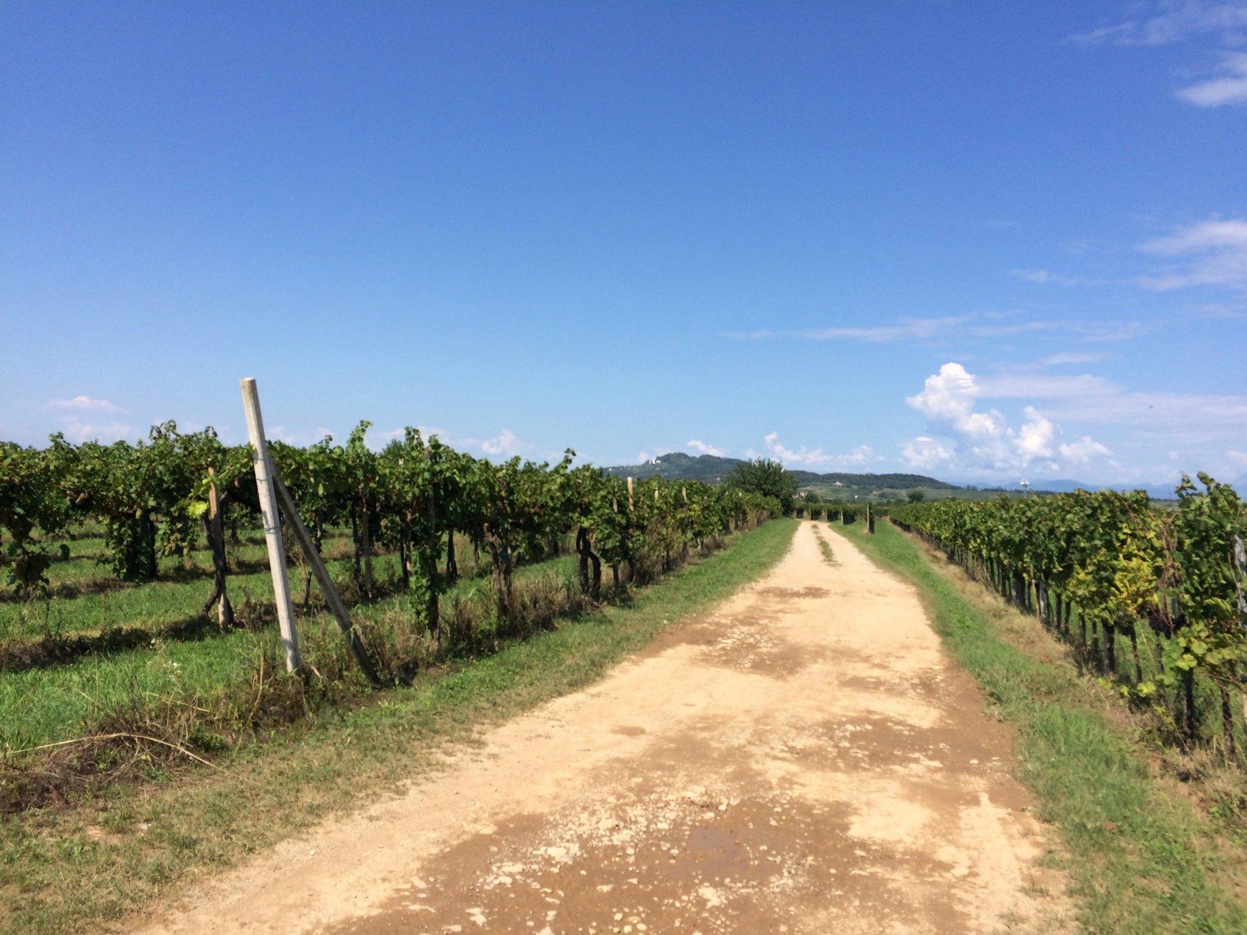 GIT - Grand Italian Trail Tappa 2: da Sistiana a Cividale 2018-09-05