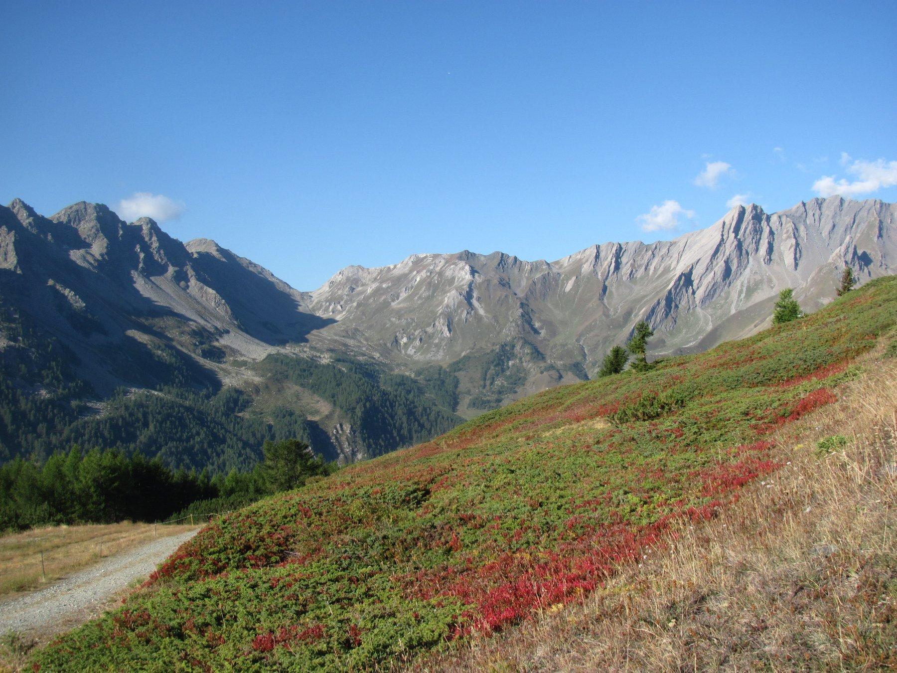 verso il Col Serena, con le piante di mirtilli rosse