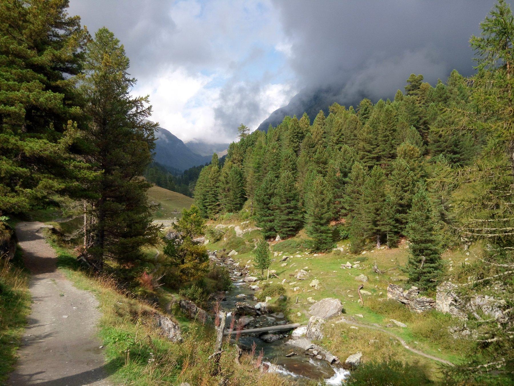 vallone di vallanta e bosco dell' alevè