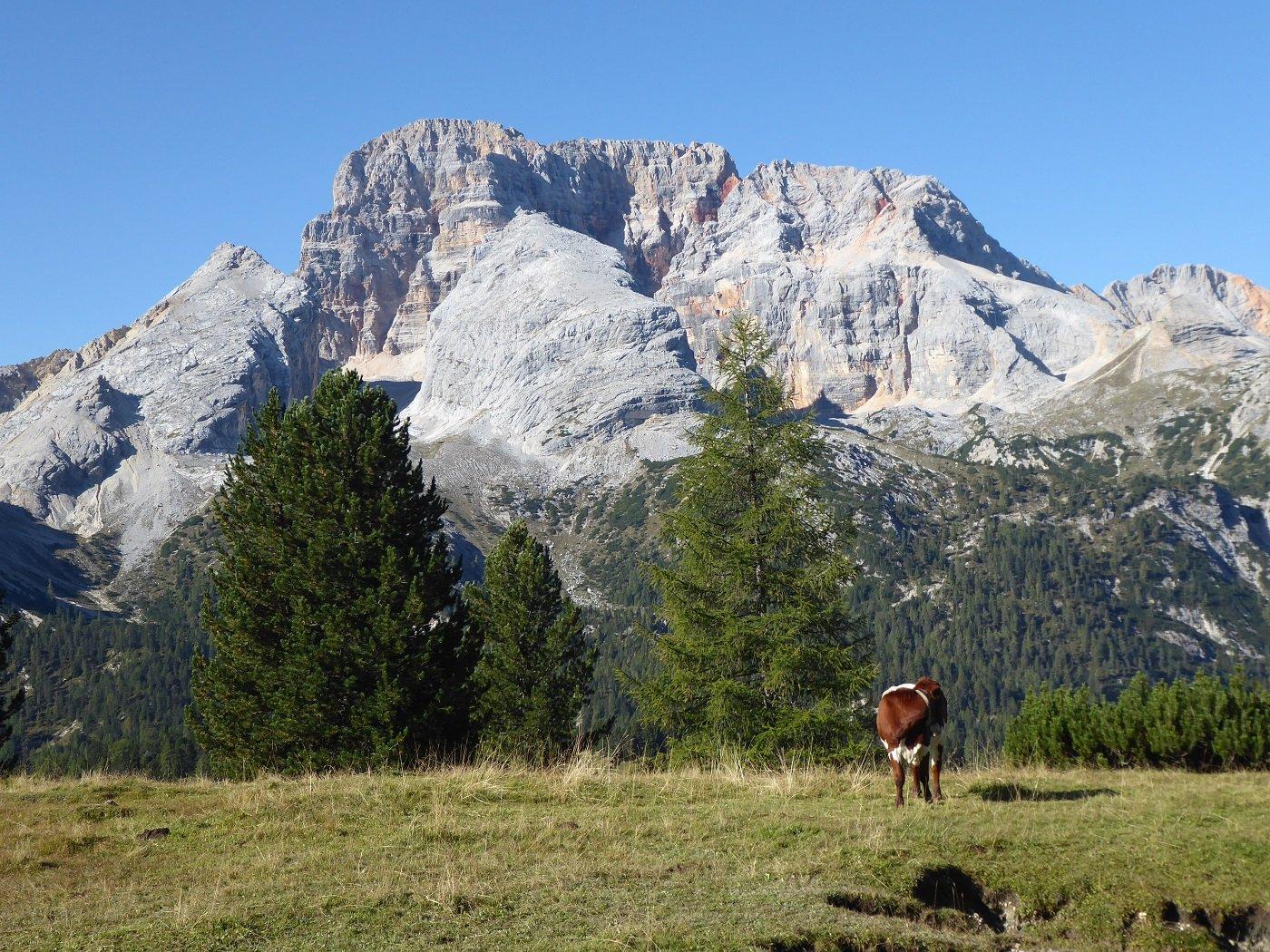 L'imponente Croda Rossa (Hohe Gaisl) dall'inizio del sentiero.