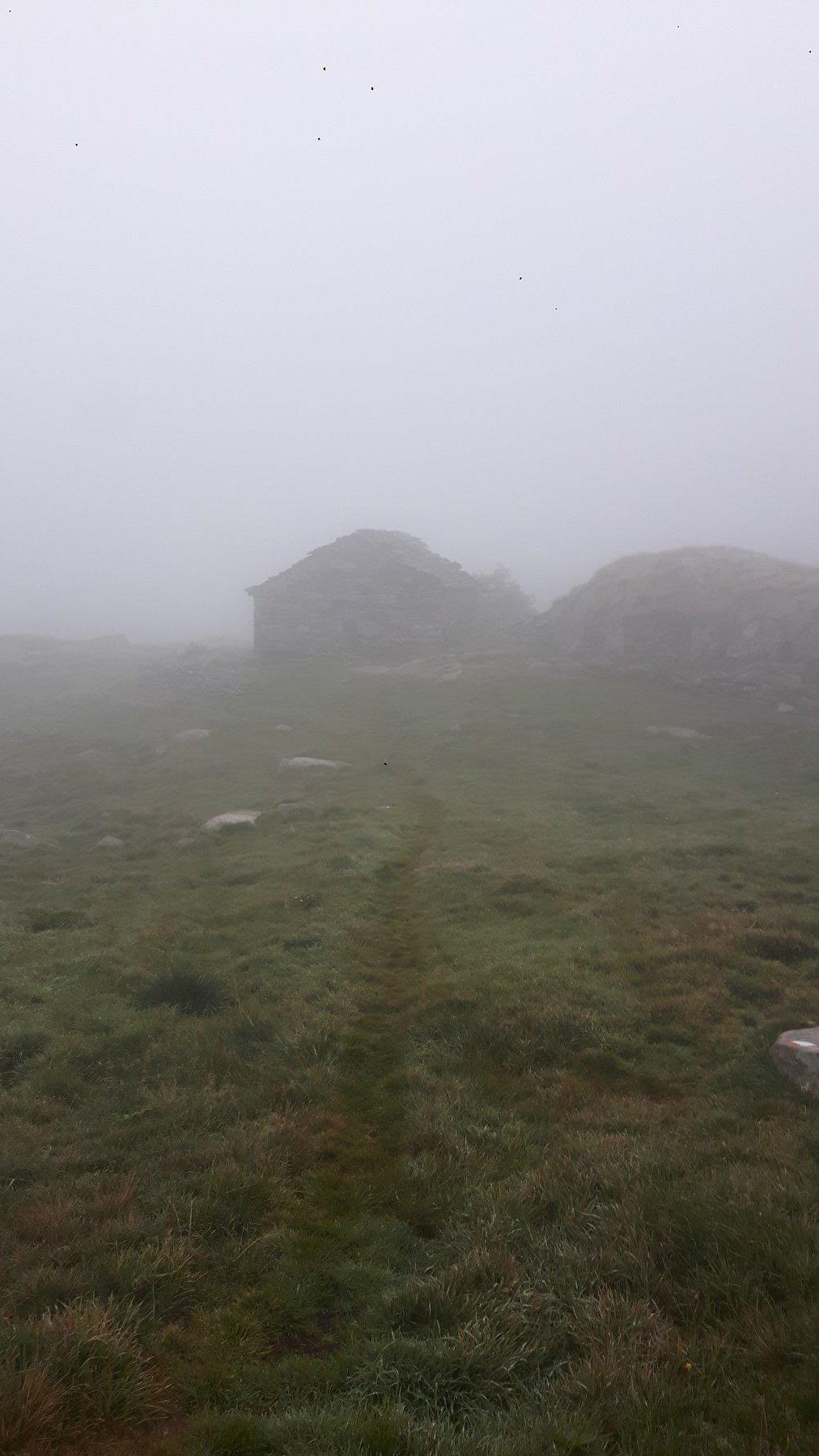 Nebbia al Vasinetto