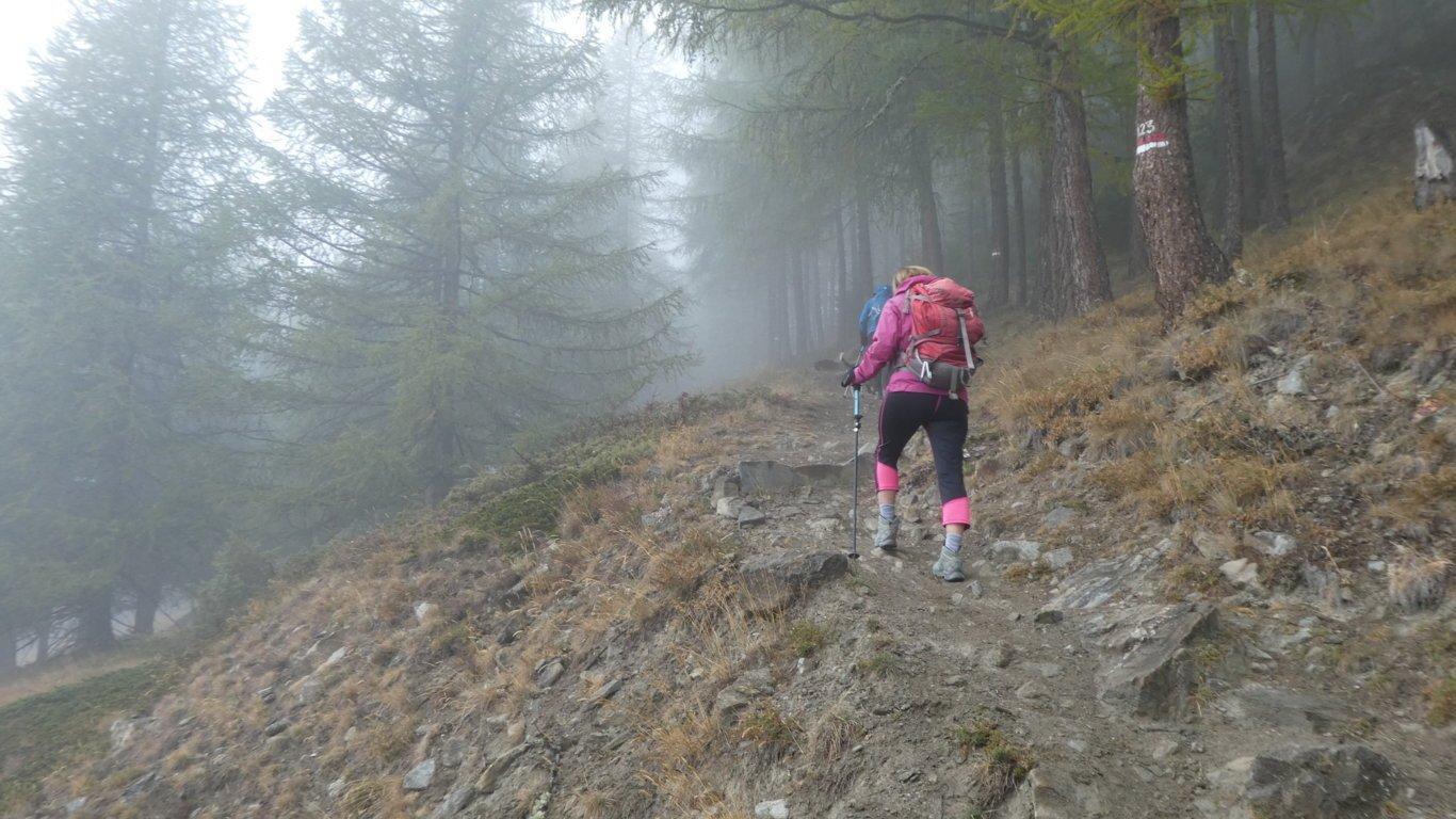 primi passi nel bosco sopra Gimillan