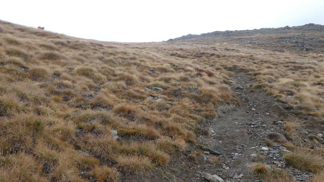 il facile pendio erboso che porta alla Punta Tsaplana