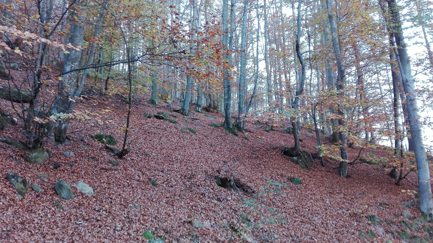 il bosco in autunno