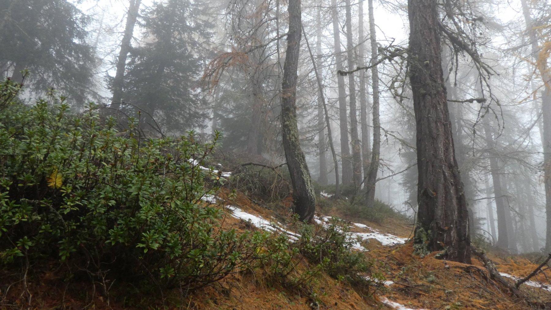 il bosco iniziale sopra Camptornè, senza neve