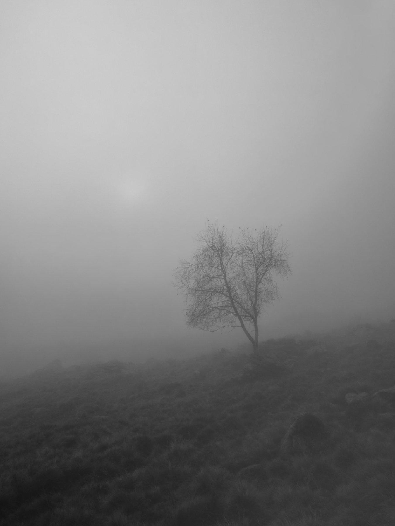 Suggestiva anche la nebbia...