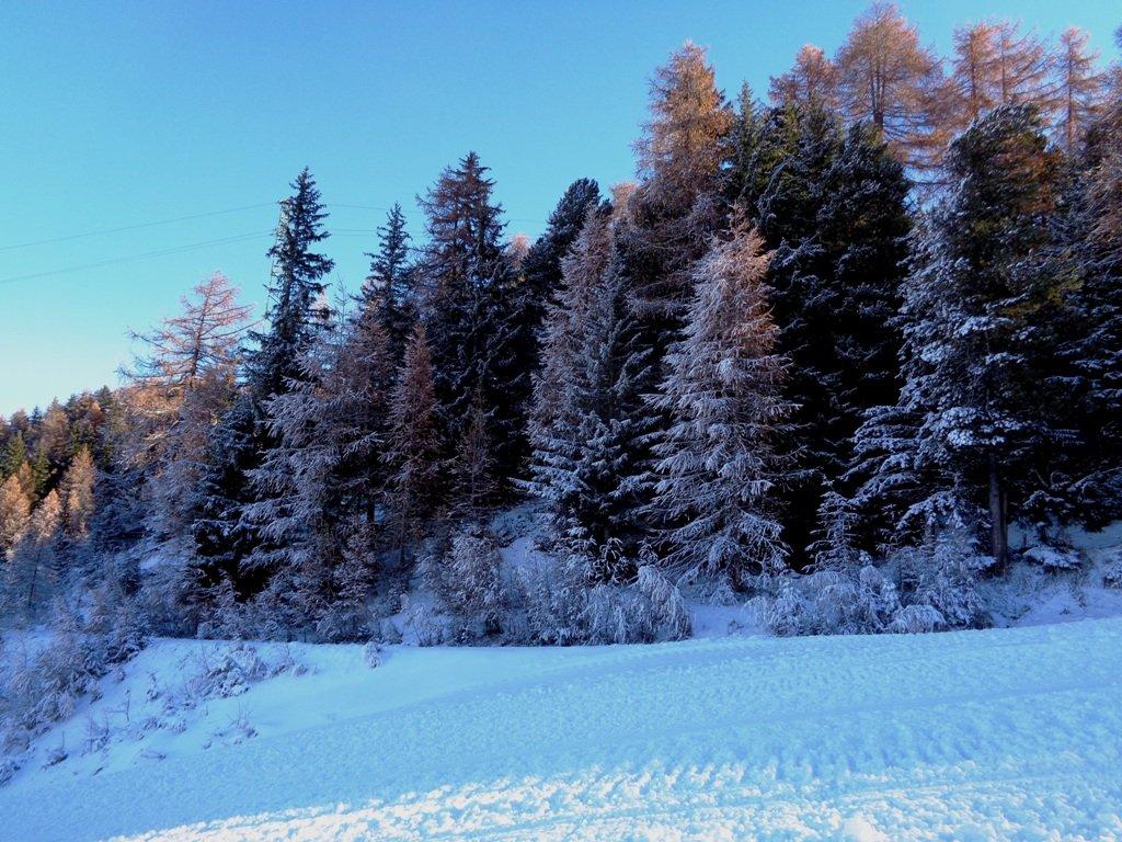 recente nevicata