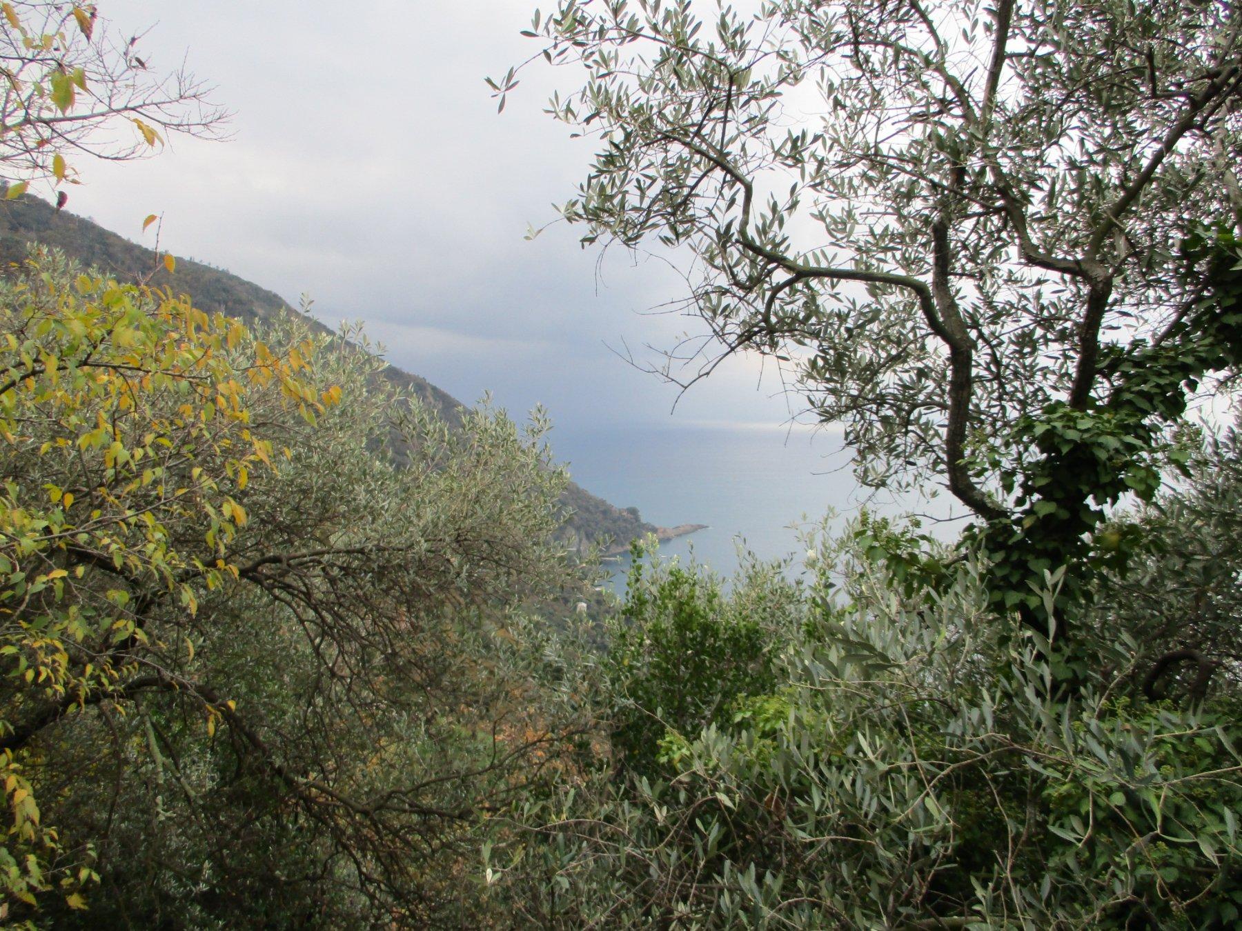 In basso Punta Chiappa