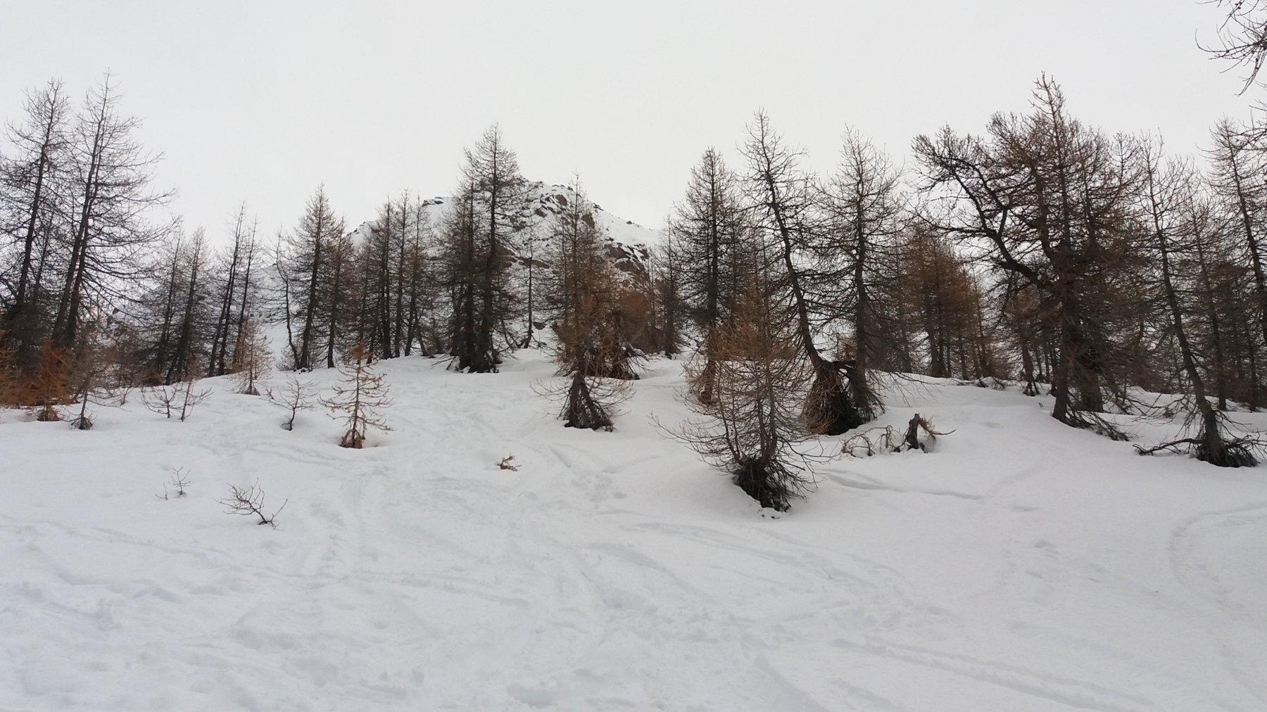 Neve piuttosto umida e pesante ma comunque sciabile