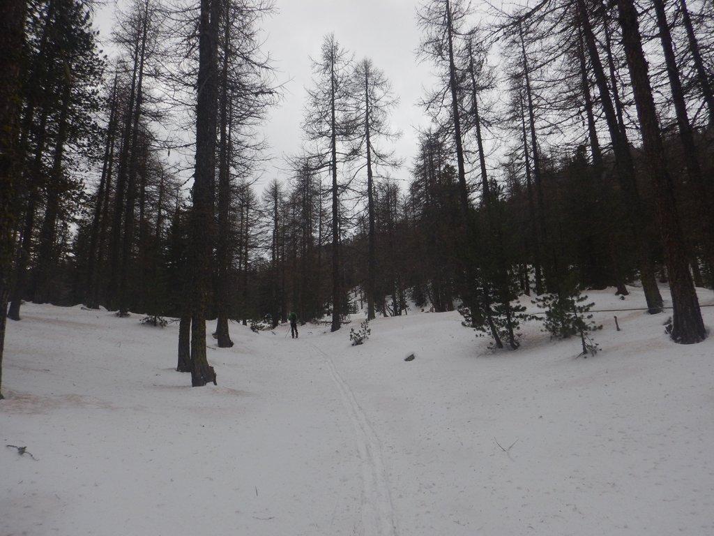 Inizio tratto nel bosco