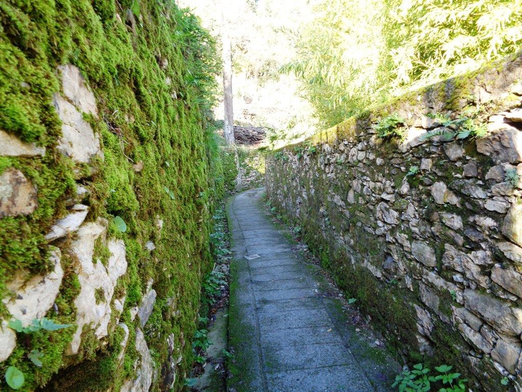 una creuza per arrivare a San Rocco, in dialetto ligure vicolo stretto