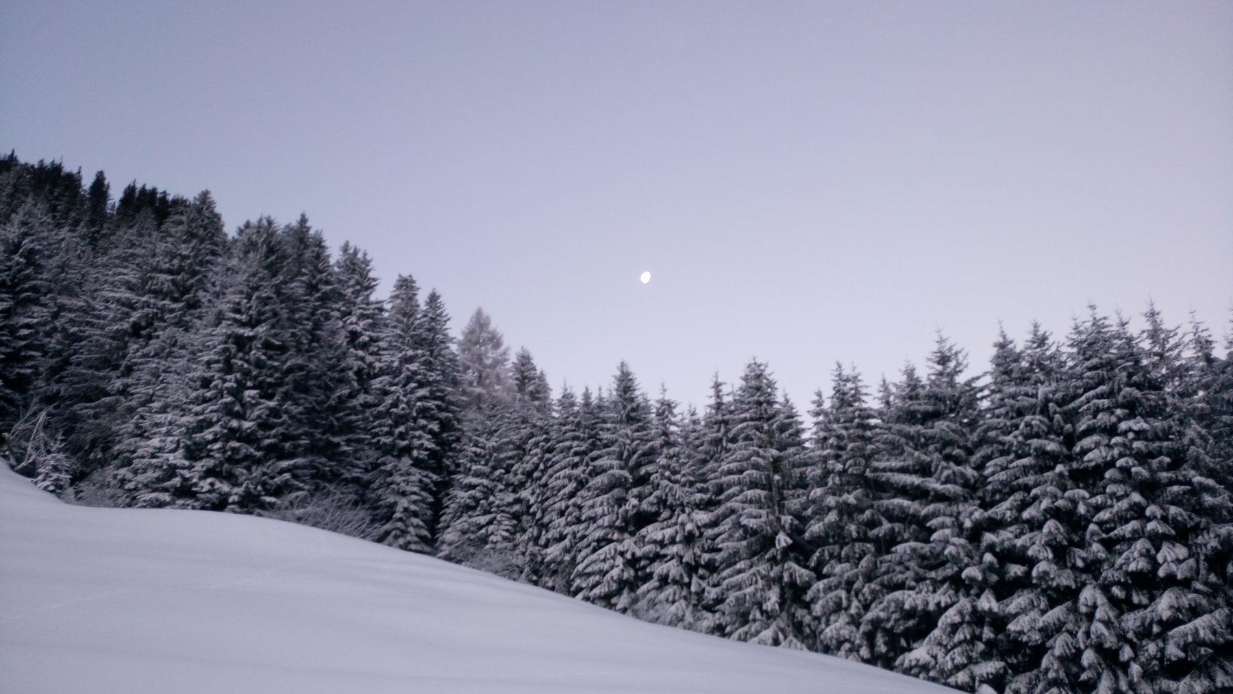 Il bosco incantevole di Nufenen
