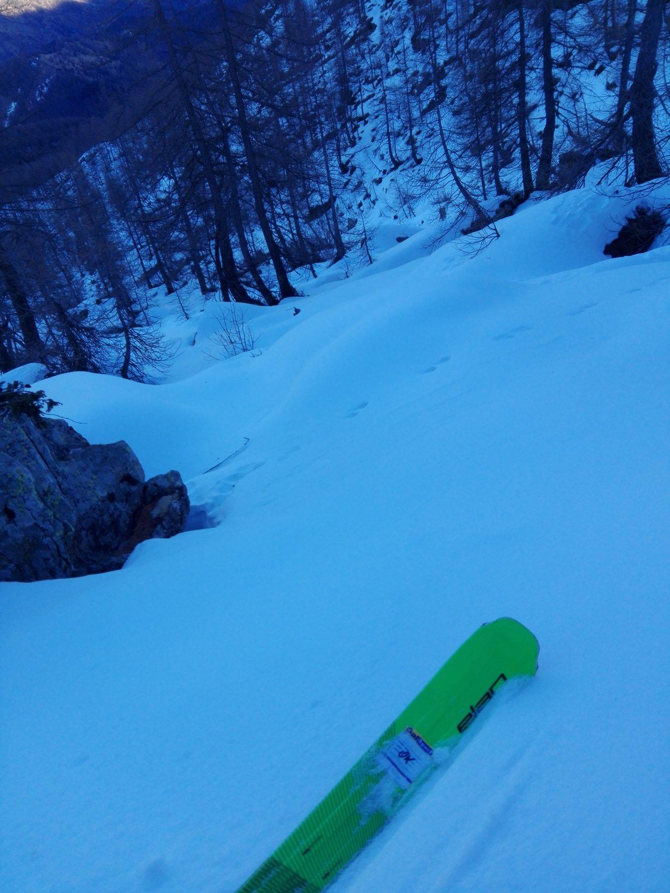 Bosco a 2000 metri
