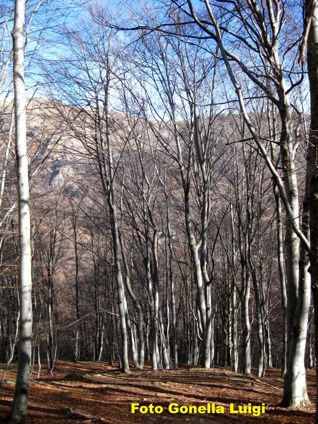 Splendido bosco
