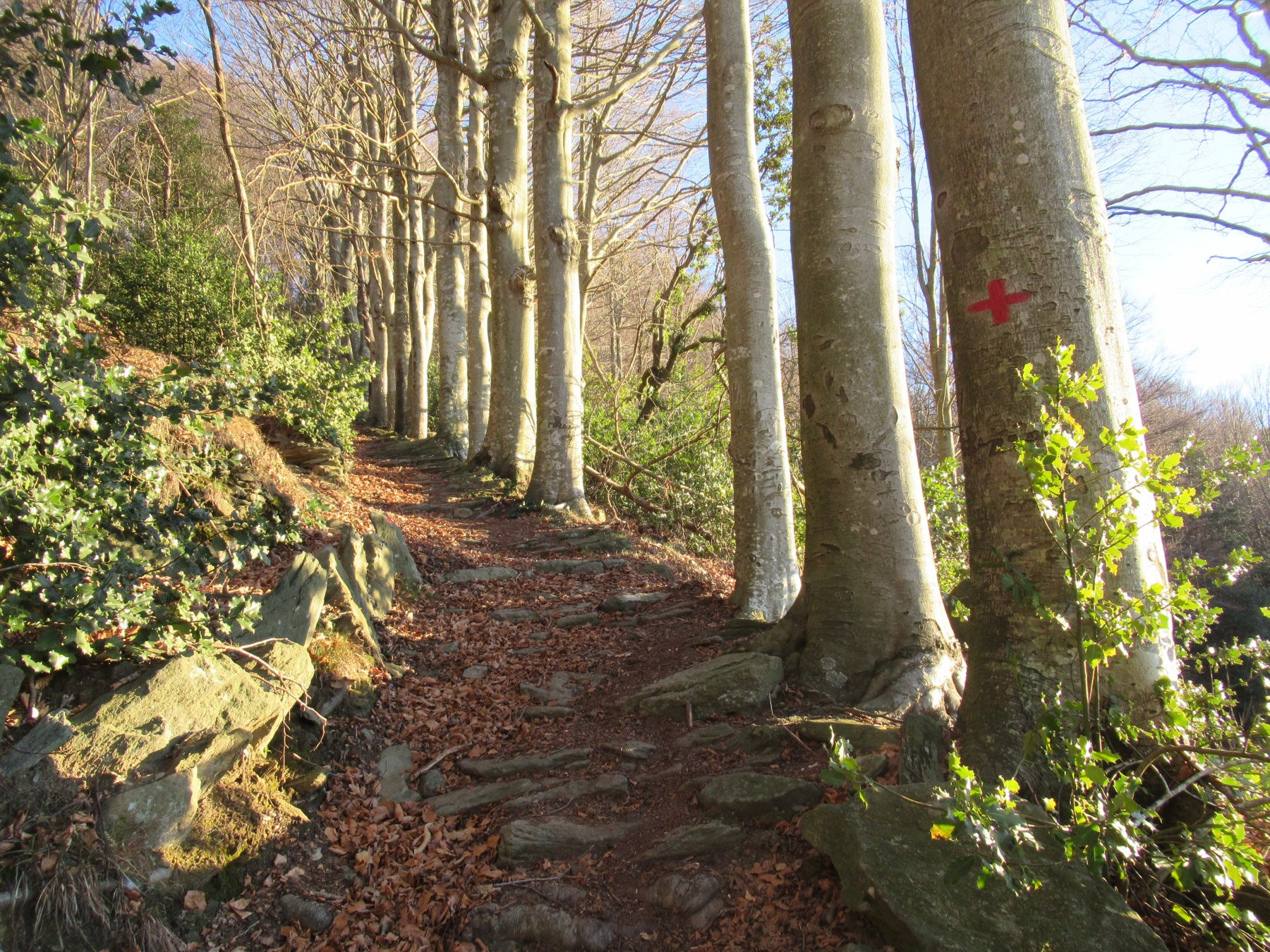Il sentiero bordato dai faggi.