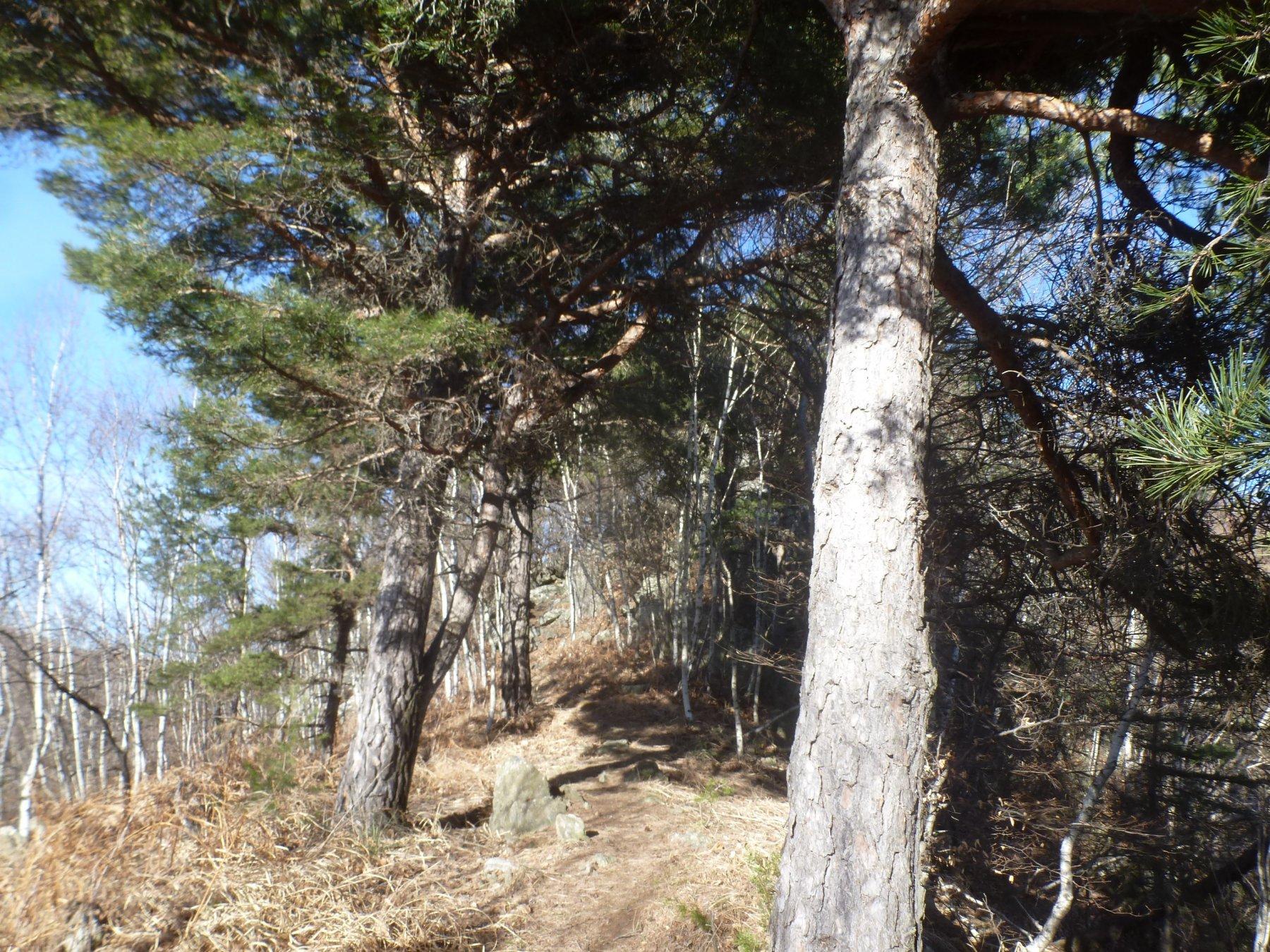 sentiero 451