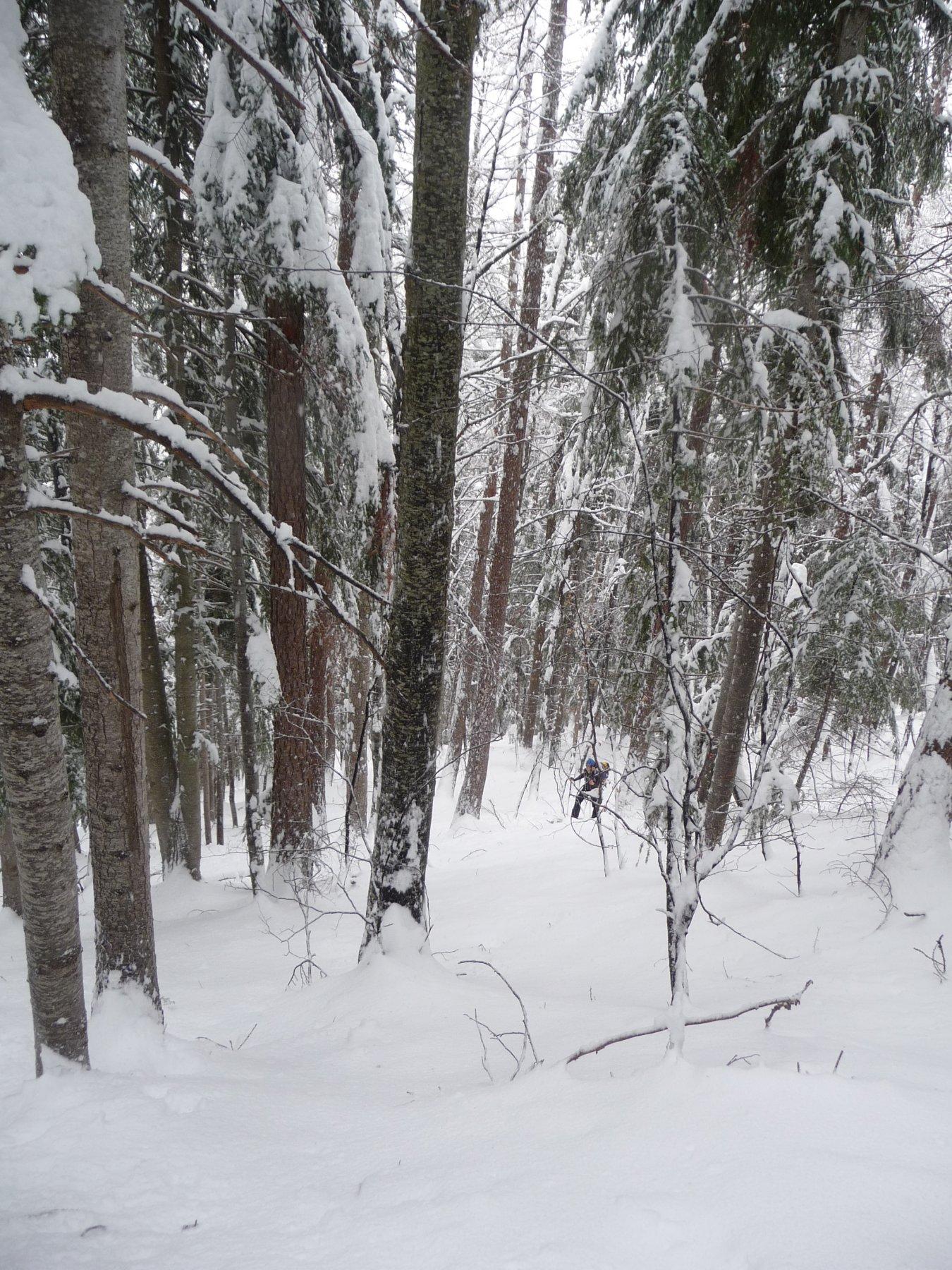 Salendo nella prima parte del bosco