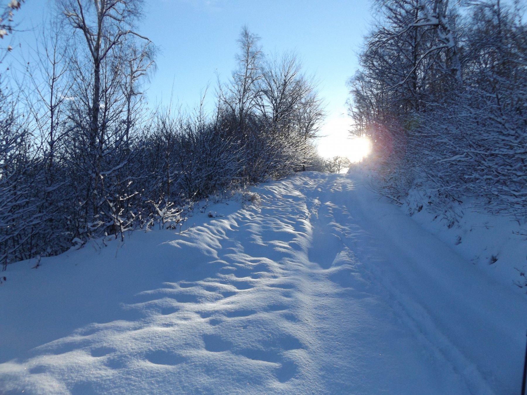 Magia di una recente nevicata, verso il sole