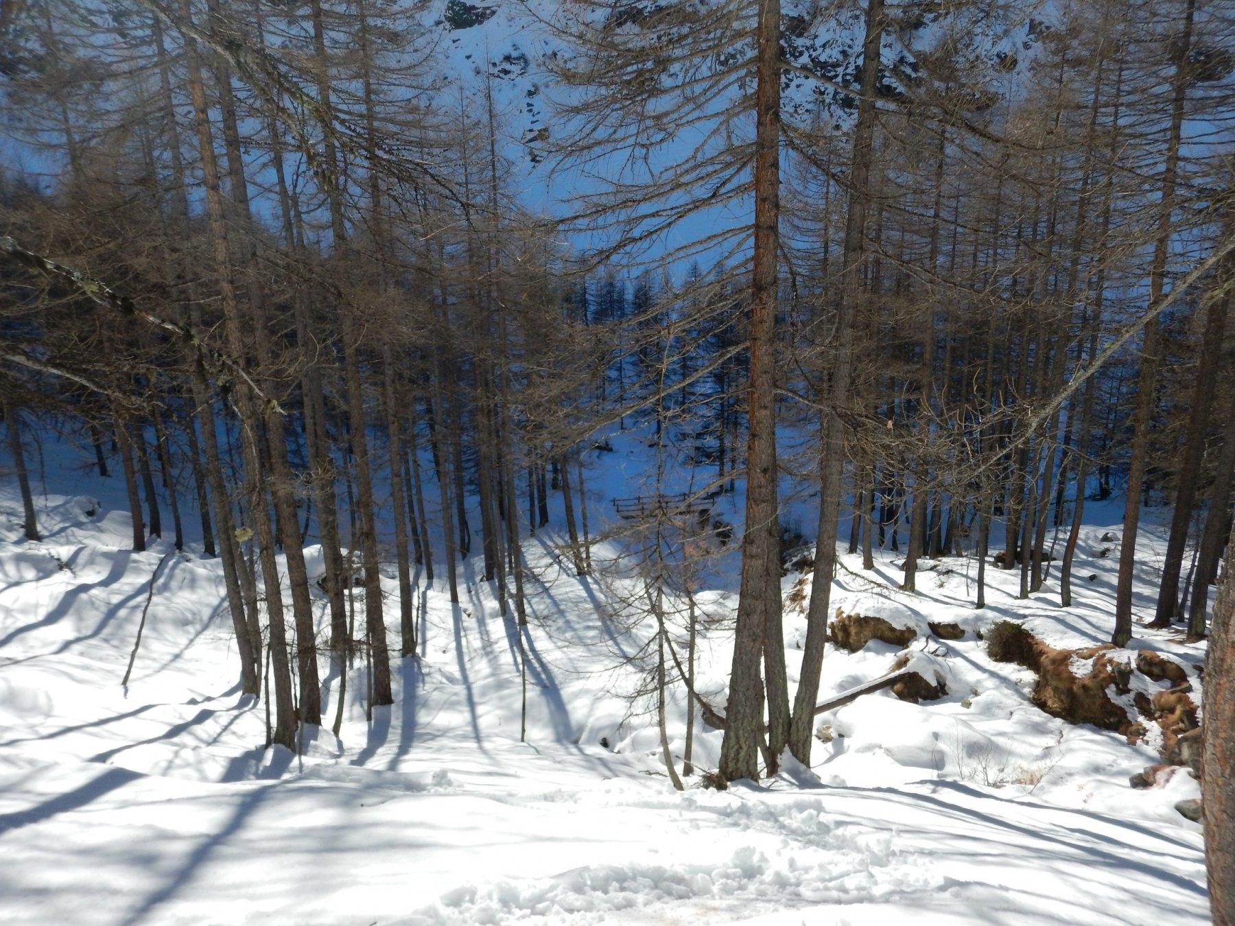 scendendo nel bosco