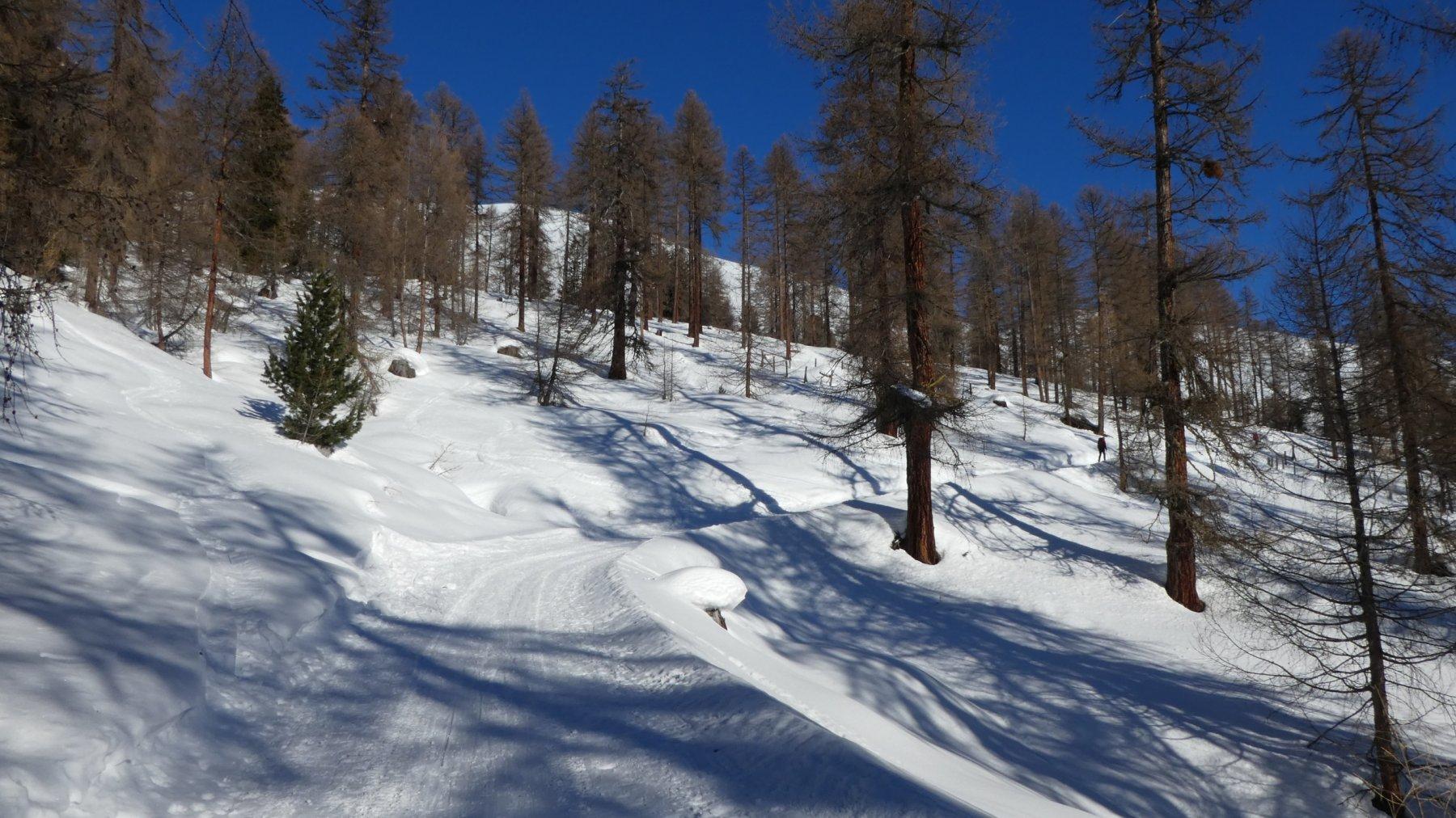 il boschetto che porta verso l'Alpe Esc-ha Dadour