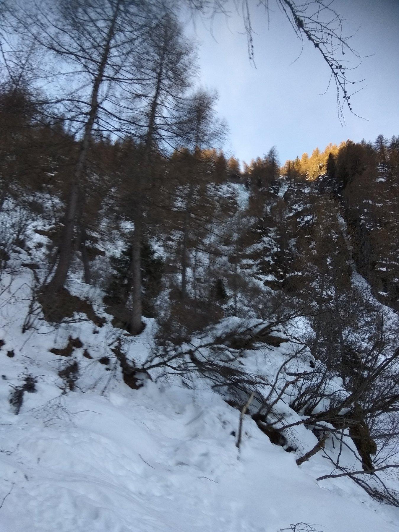 Nel bosco salendo all'Alpe