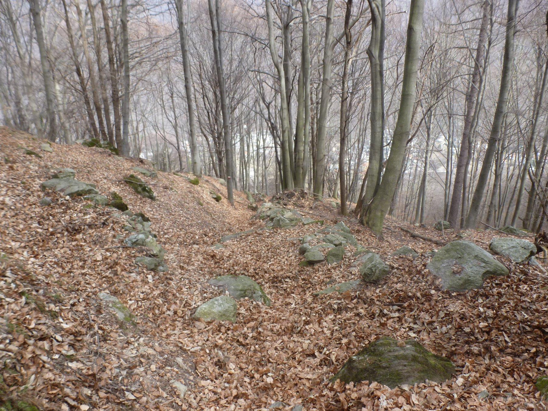 tante foglie sul sentiero di discesa