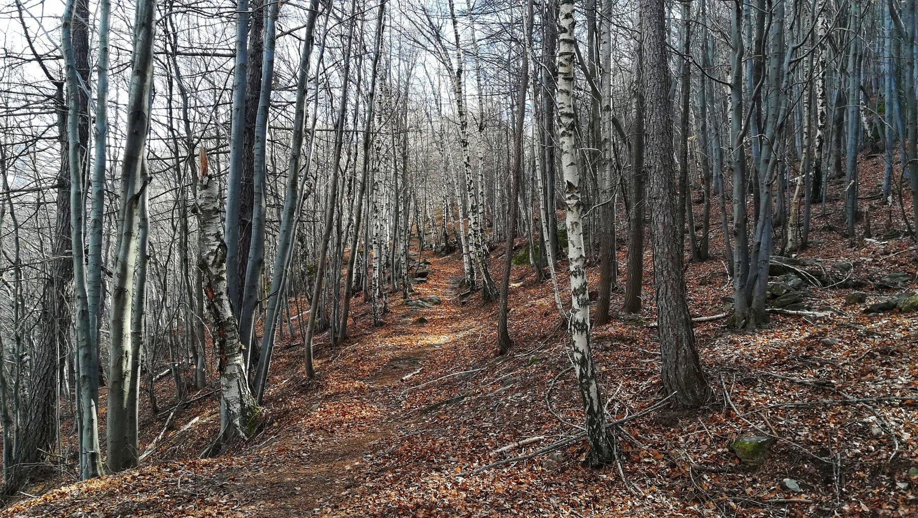 In salita nei boschi sopra machaby