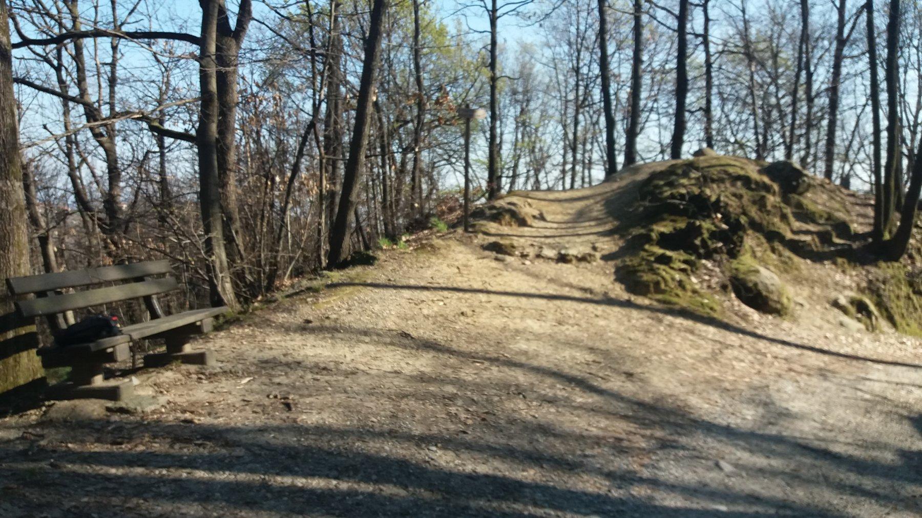 Un tratto nel bosco del Vaj
