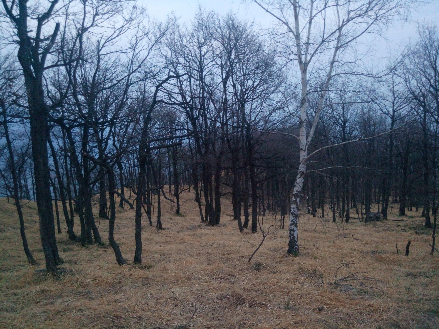 Il bosco martoriato dagli incendi
